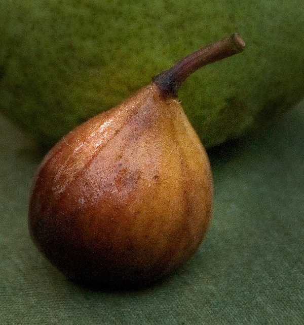 Plucking Wild Figs